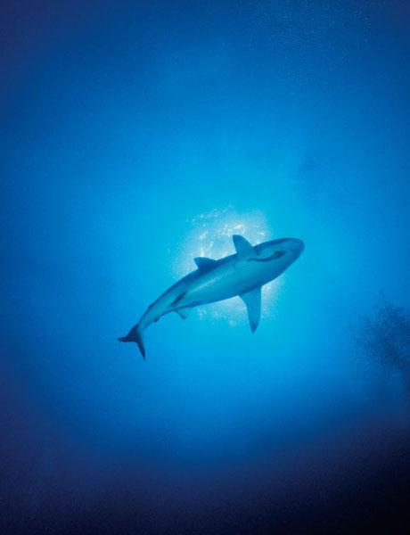 requin séjour plongée egypte