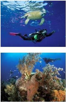 plongée mexique