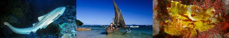 voyage plongée madagascar