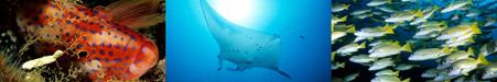 voyage plongée maldives