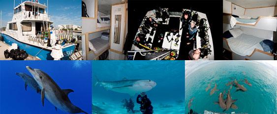 croisière plongée bahamas requins