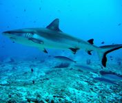 plongée requins egypte