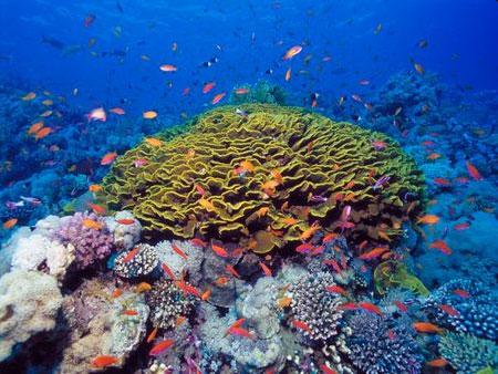 plongée mer rouge
