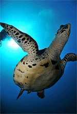 croisière plongée thailande et photo sous-marine
