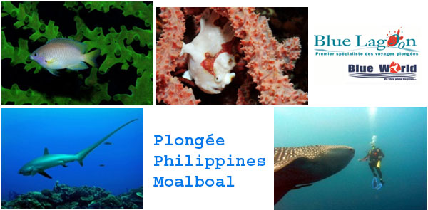 la plongée sous-marine philippines moalboal