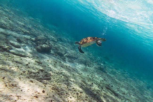 vacances snorkeling