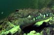 voyage plongée crocodiles Okavango