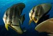 croisière plongée salomon