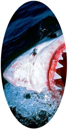 plongée requins blancs afrique du sud