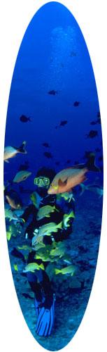 voyage plongée république dominicaine