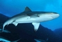 centres de plongée et requins