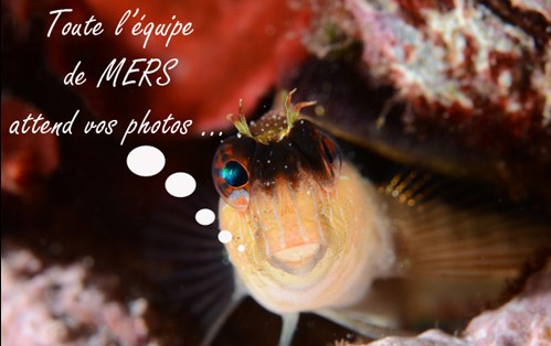 Concours photos sous marines Challenge Off
