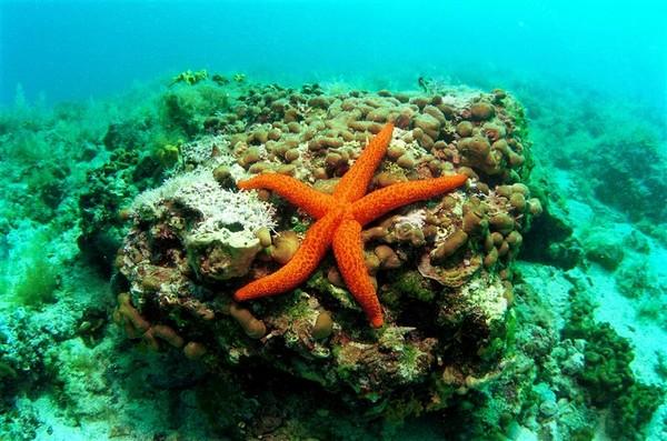 Faire de la plongée croatie