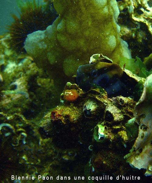 Site de rencontre plongeur
