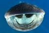voyage plongée djibouti requin baleine
