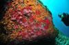 croisière plongée marseille