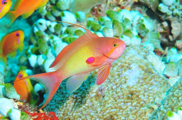 rencontres au pays de l'or vert maldives