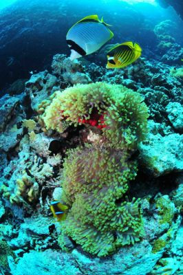 corail egypte mer rouge